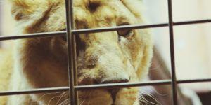 Pourquoi il est temps d'interdire les cirques avec les animaux en France