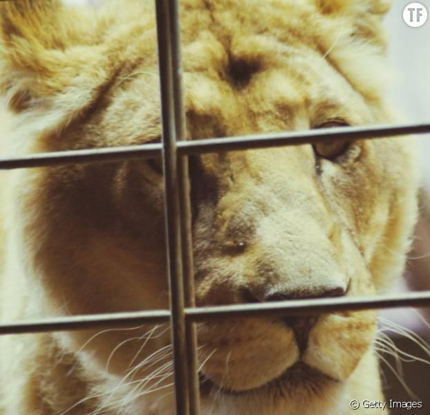 A quand l'interdiction des cirques avec animaux sauvages en France ?