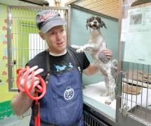 Il relooke les vieux chiens des refuges pour leur offrir un foyer plus vite