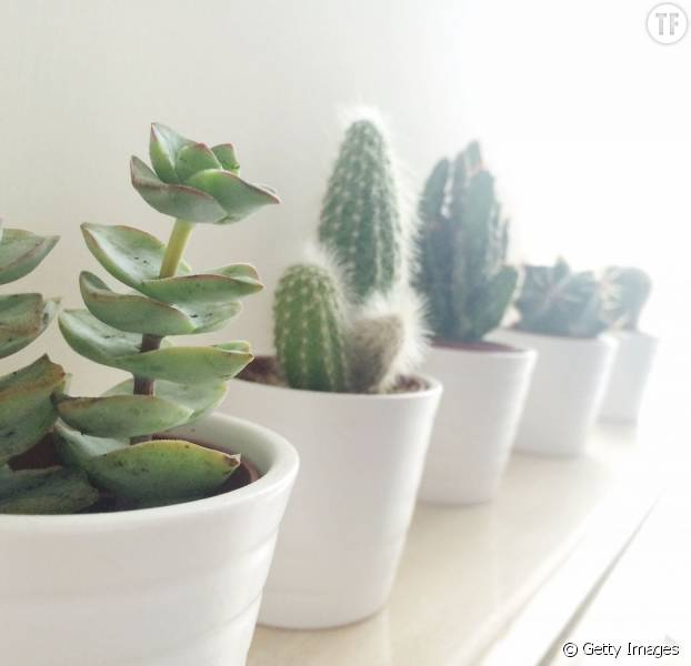 5 bonnes raisons de vous offrir une jolie plante verte pour votre bureau terrafemina. Black Bedroom Furniture Sets. Home Design Ideas