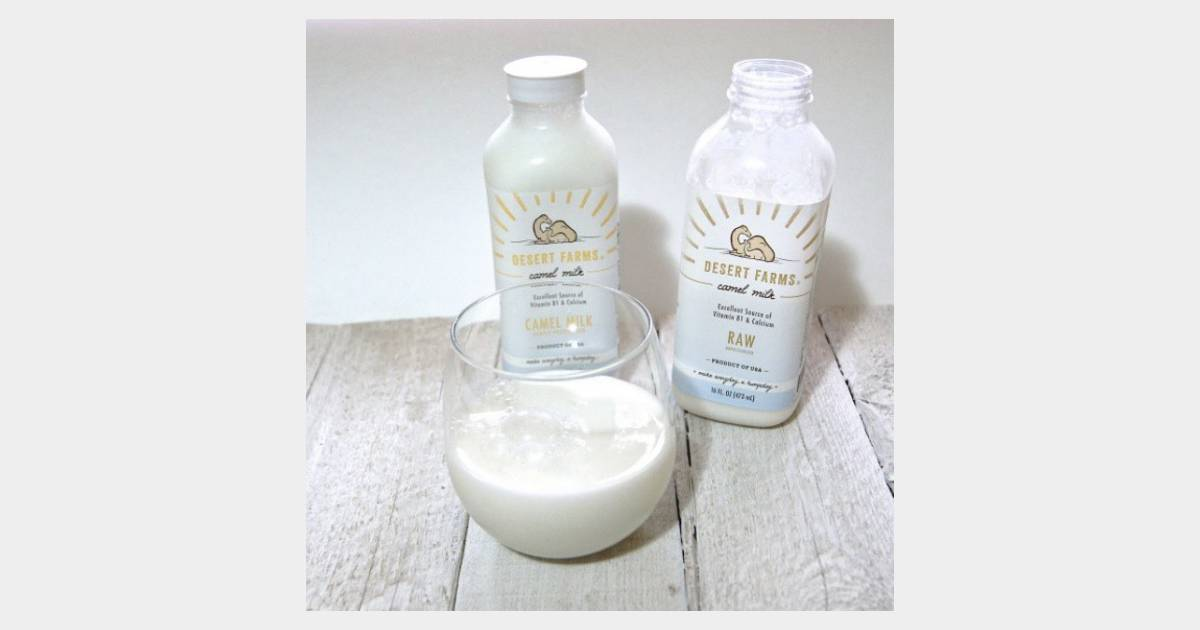 le lait de chamelle la nouvelle boisson magique pour une peau de r ve. Black Bedroom Furniture Sets. Home Design Ideas