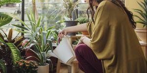5 plantes qui ont le pouvoir de purifier l'air de votre intérieur