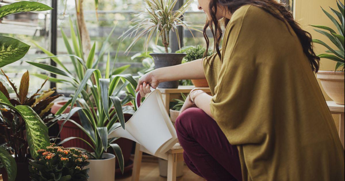 5 plantes qui ont le pouvoir de purifier l 39 air de votre. Black Bedroom Furniture Sets. Home Design Ideas