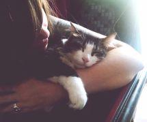 Votre chat ne le montre pas mais il vous aime (promis, juré)