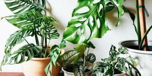Pourquoi mes plantes meurent (alors que je leur donne plein d'amour) ?