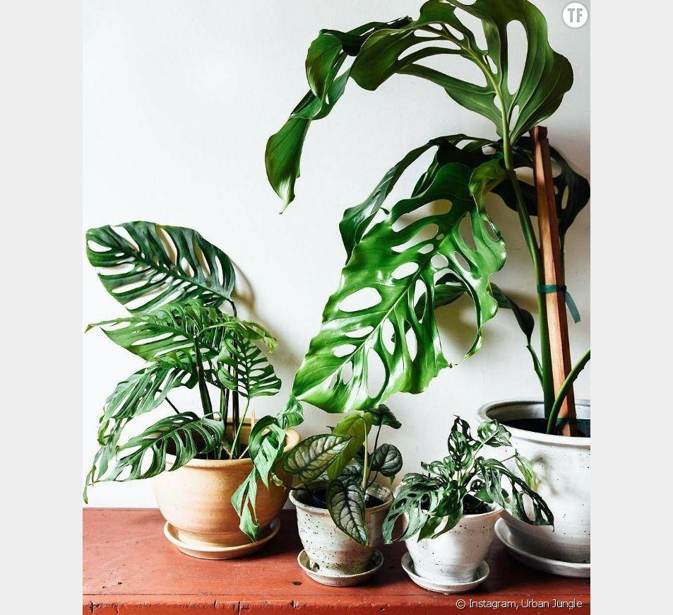 Plante Exterieur Qui Aime L Eau pourquoi mes plantes meurent (alors que je leur donne plein