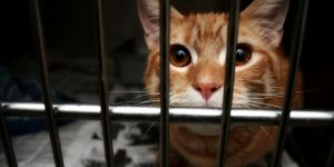 La chouette idée d'Ikea pour aider un refuge animalier