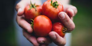 Pourquoi il ne faut surtout pas manger de tomates en hiver