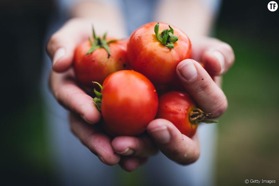 Manger des tomates en hiver