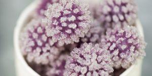La recette trendy du sucre au lilas