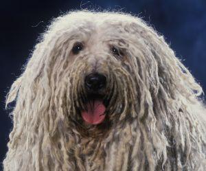Votre chien kiffe secrètement le reggae