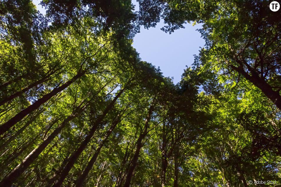 5 façons d'offrir de l'amour à la Terre