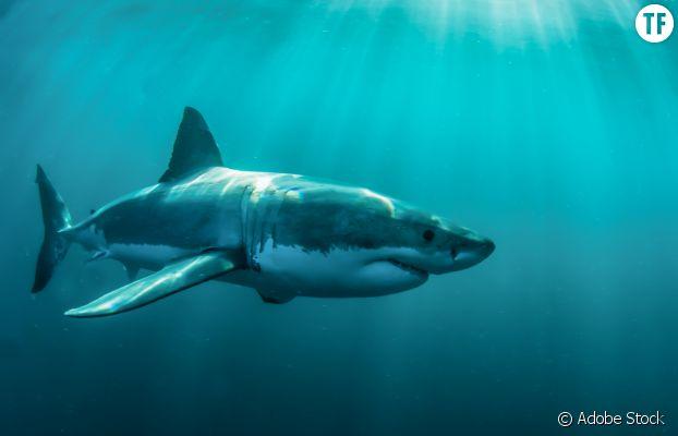 Chantelle Doyle et Mark Rapley se sont engagés pour la protection des requins.