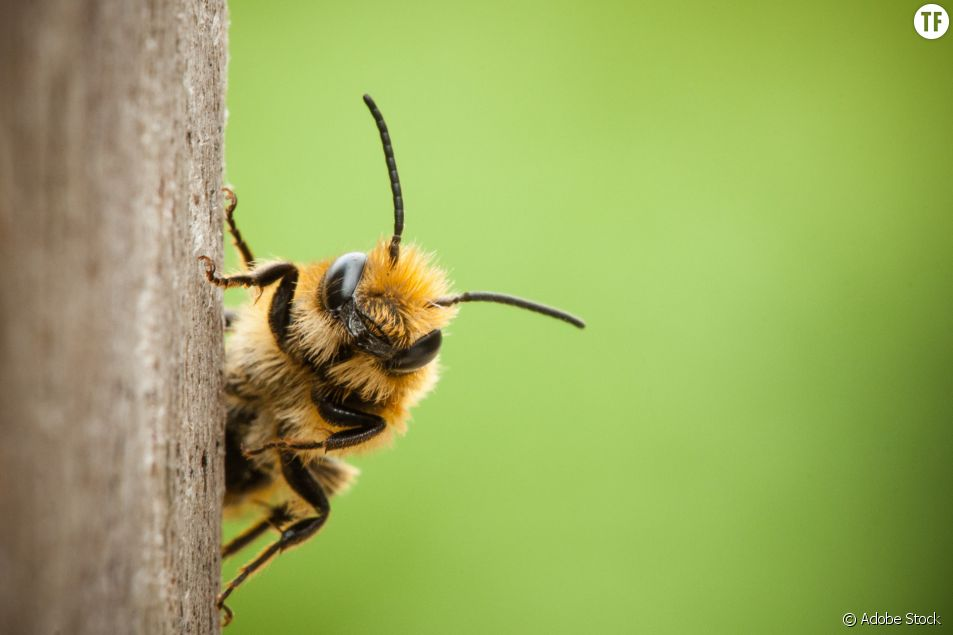 Les abeilles au secours des malades du cancer du sein ?