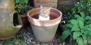 17 pots à chat qu'il vaudrait mieux éviter d'arroser