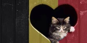 Belgique : des chatons pour brouiller les pistes pendant les opérations antiterroristes