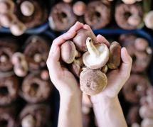 Le régime champignons : faut-il l'adopter ?