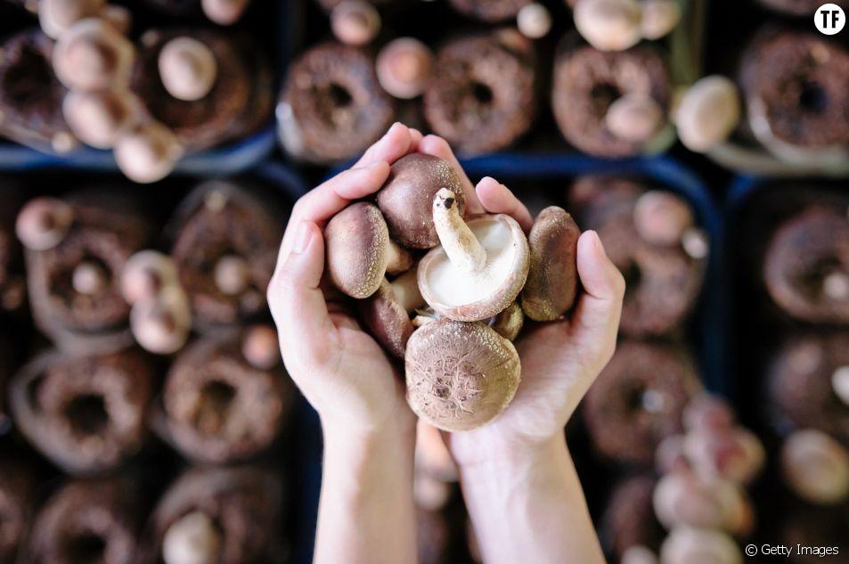 Le régime champignons : on en pense quoi ?