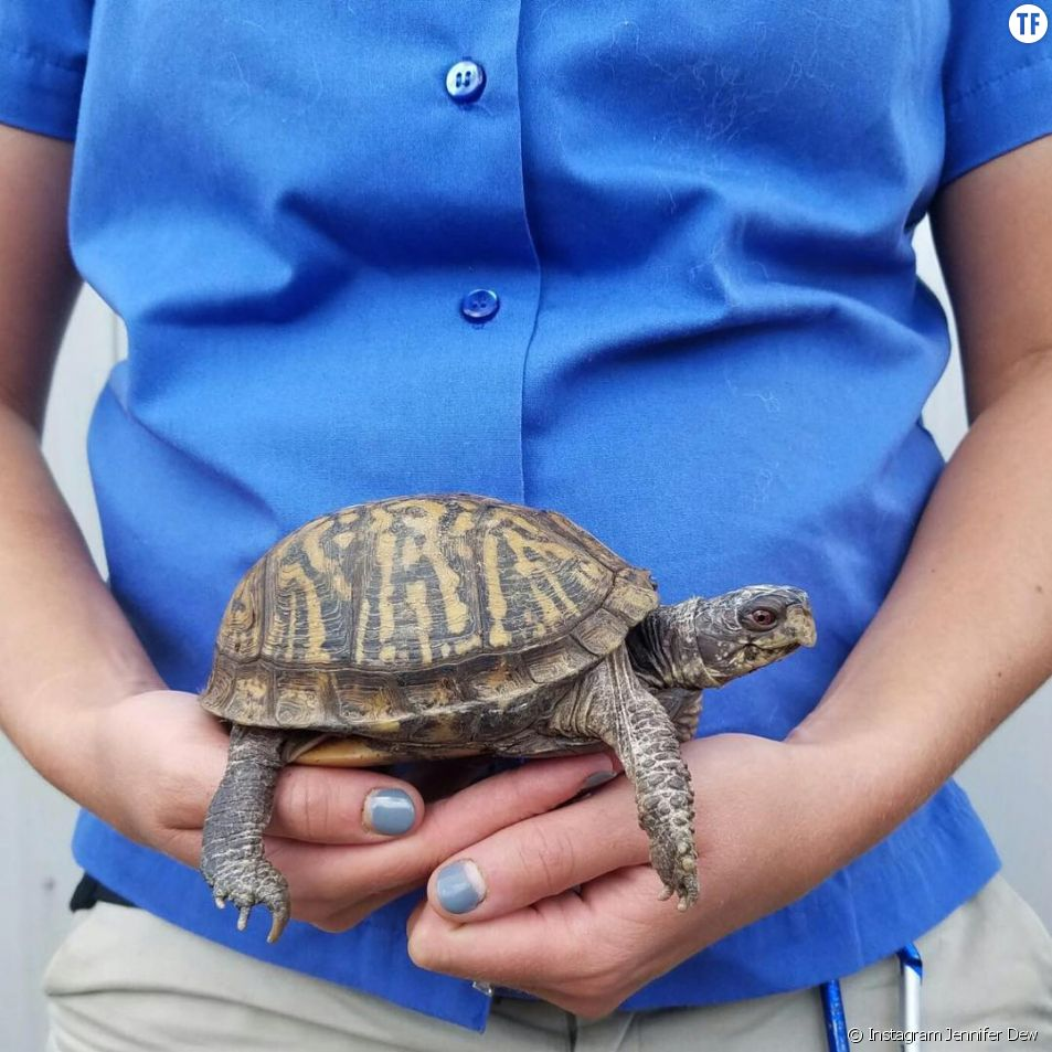 Les jolies photos de grossesse d'une gardienne de zoo