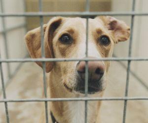 200 chiens sauvés in extremis d'une ferme à viande en Corée du Sud