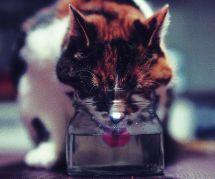 Pourquoi les chats sont-ils si pointilleux avec leur bol d'eau ?
