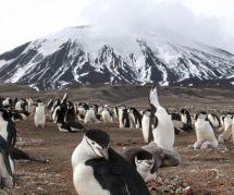 Planète animale : revoir le documentaire événement en replay sur France 2/Le Pluzz