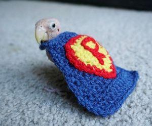 Ce petit perroquet reçoit des pulls tricotés de la planète entière
