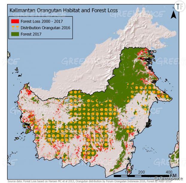 Entre 2015 et 2017, 70 000 hectares de forêts tropicales en Indonésie détruits