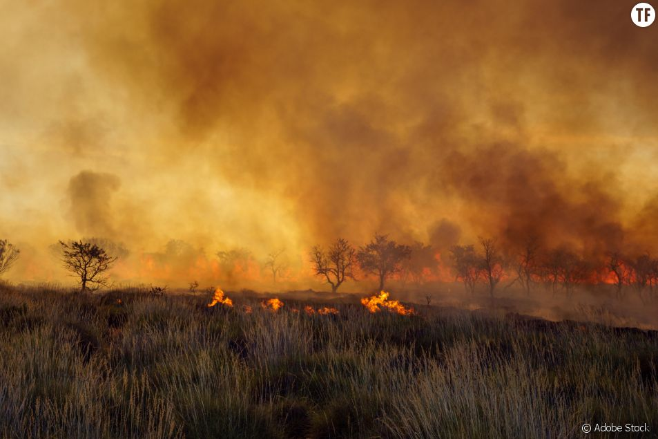 Les paysages dévastés par les flammes de l'Australie.