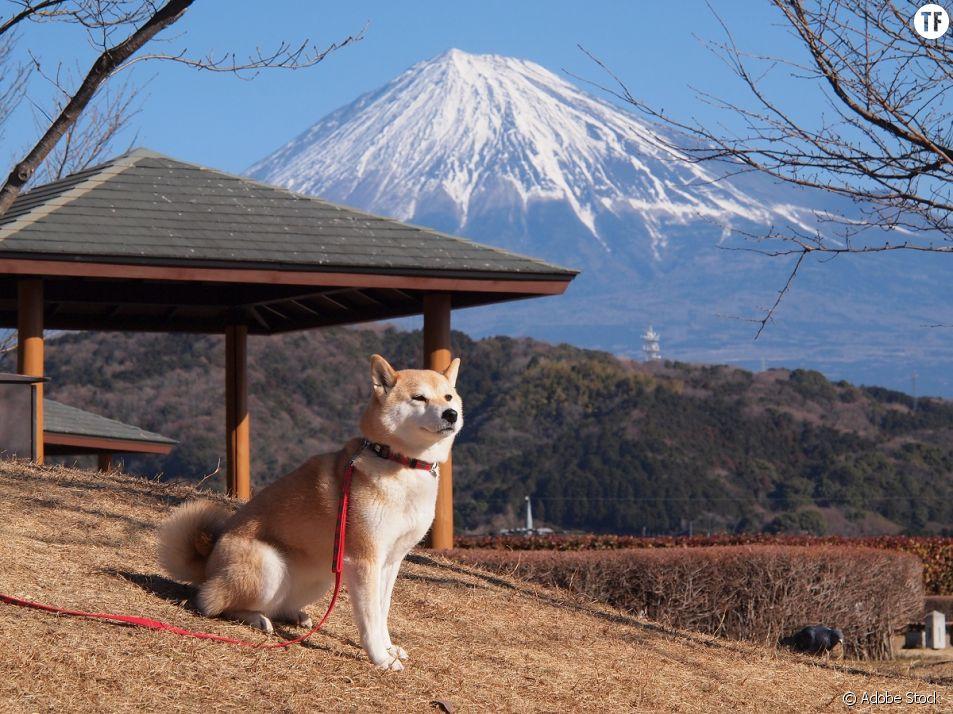 Au Japon, c'est une patrouille de chiens qui veille sur les enfants.