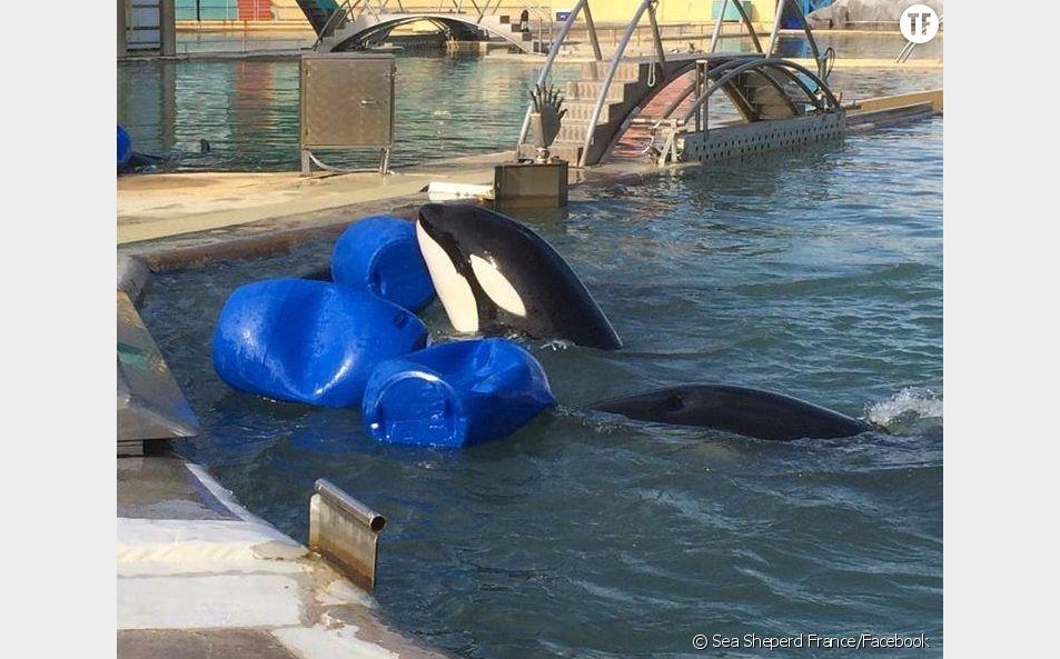 Mort d'une orque à Marineland : à quand la fermeture du parc ?