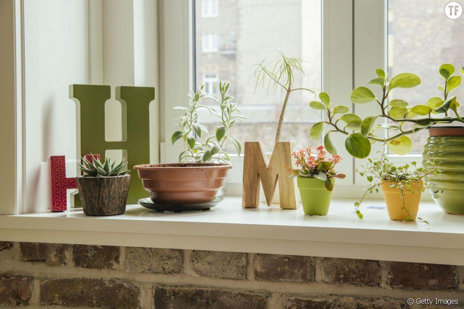 Des plantes qui ne vous plantent jamais ?