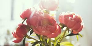 7 astuces pour conserver un bouquet de fleurs plus longtemps