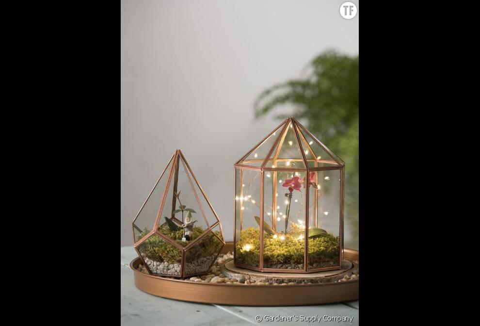 Des terrariums transformés en photophores ?