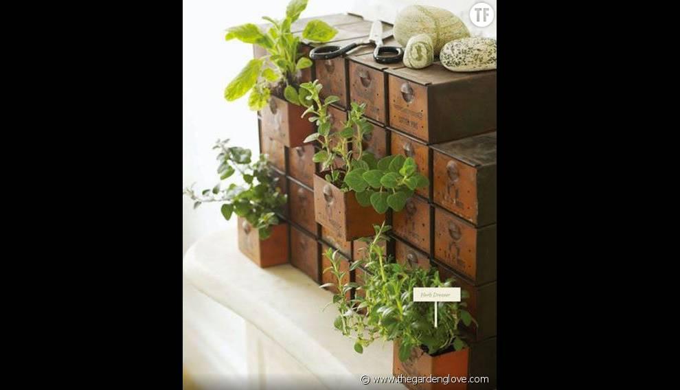 Des plantes à tiroirs