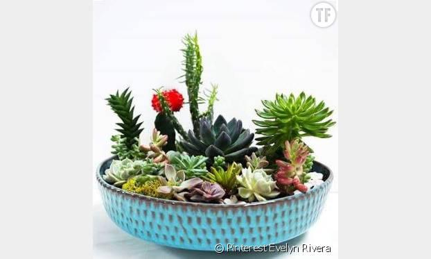 Un jardin de cactus
