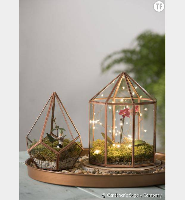 Des terrariums transformés en photophore