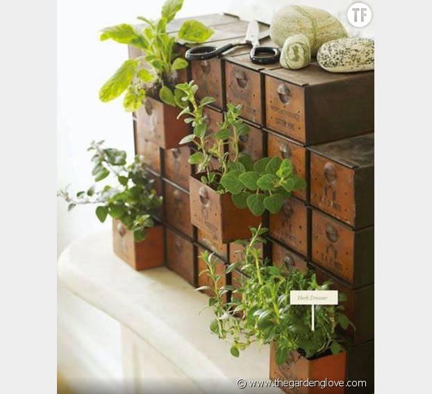 Le tiroir à plantes