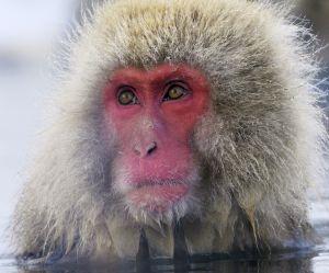 7 animaux extraordinaires qui sont menacés d'extinction imminente