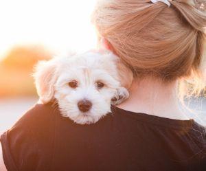 Le chien est le meilleur confident de l'homme, c'est la science qui le dit