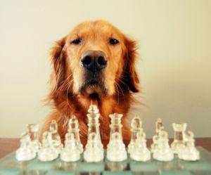 Les chiens sont capables de reproduire nos faits et gestes (et c'est flippant)