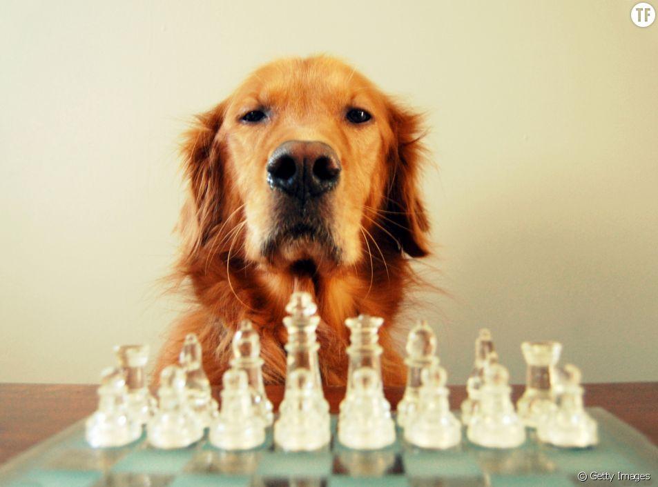 Les chiens ont-ils une mémoire épisodique ? La science tente de répondre