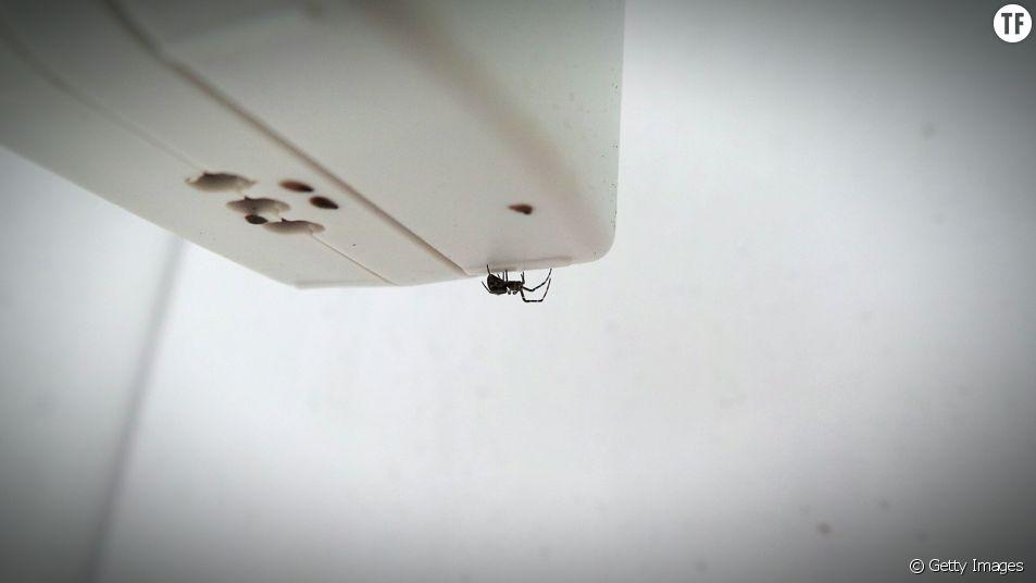 3 bonnes raisons d'accueillir les araignées chez vous