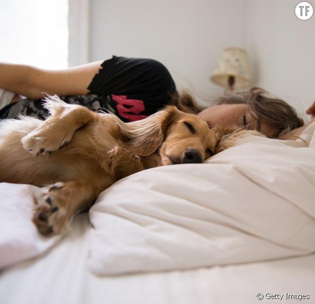 La clé pour un meilleur sommeil ? Dormir avec son chien