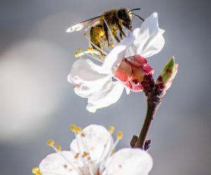 BeeSexual, le porno pour sauver les abeilles (et la planète)