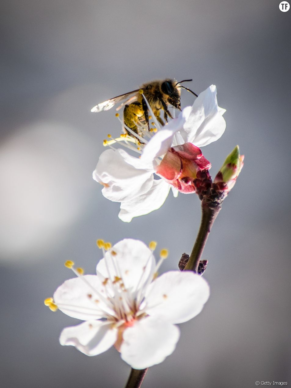 Pornhub lance BeeSexual, le nouveau genre de porno pour sauver les abeilles
