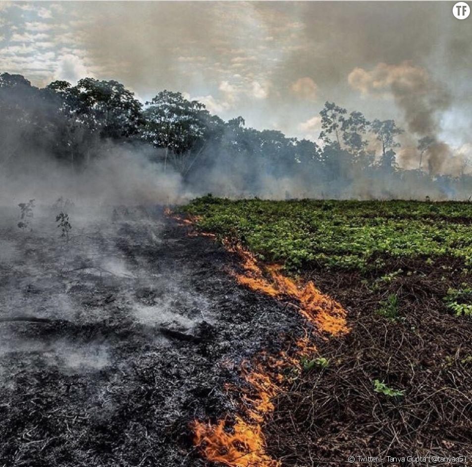 L'Amazonie est en proie aux flammes depuis des jours.