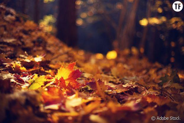 Les vertus de l'automne.