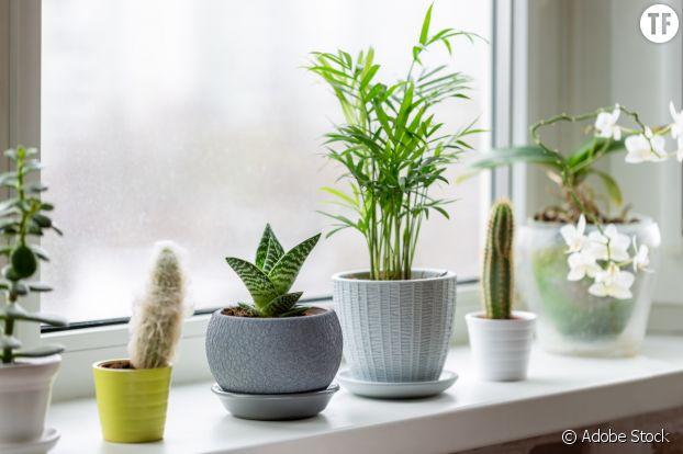 Les plantes vertes, déco et bien être.