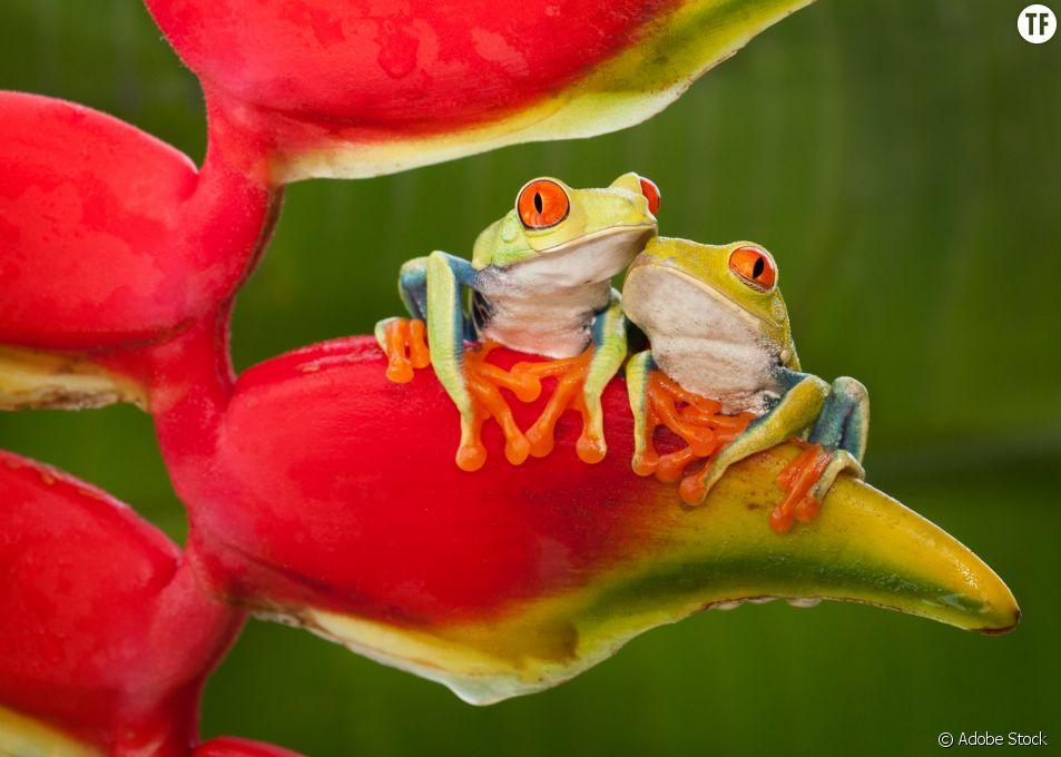 La grenouille, la position sexuelle qui met l'accent sur l'intimité